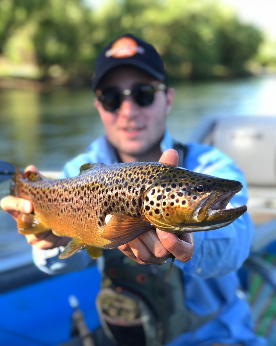 Trout Fishing Argentina (1)